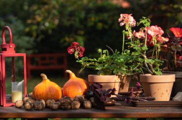 jesień od Oli